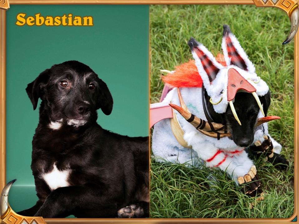 Adopta un Loa - Blizzard y Adote um Focinho se asocian para buscar nuevo hogar a estas entrañables mascotas