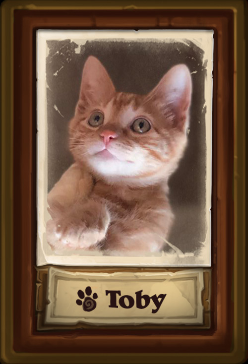 Toby_Cat.jpg
