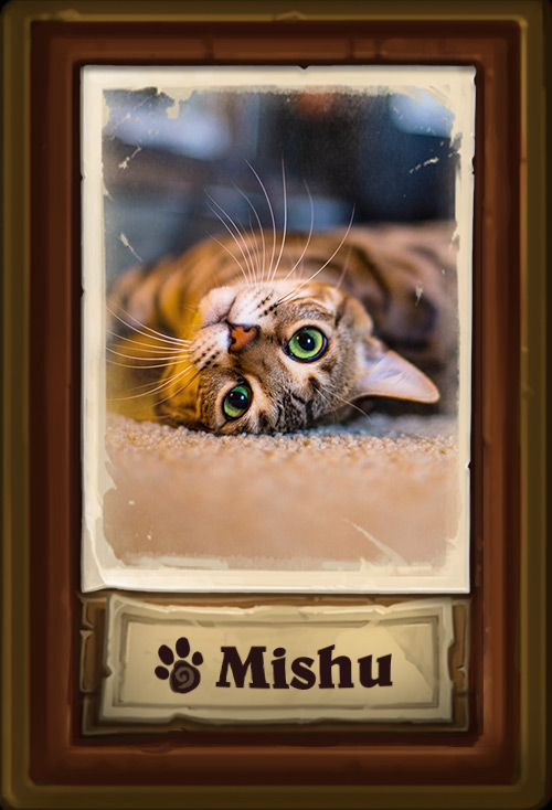 Mishu_Cat.jpg